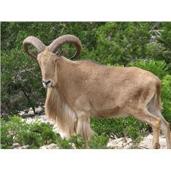 Texas - 3 Day - Aoudad or Blackbuck Hunt for One Hunter