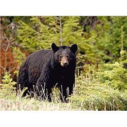 British Columbia - 10-Day - Spring Black Bear Hunt for One Hunter