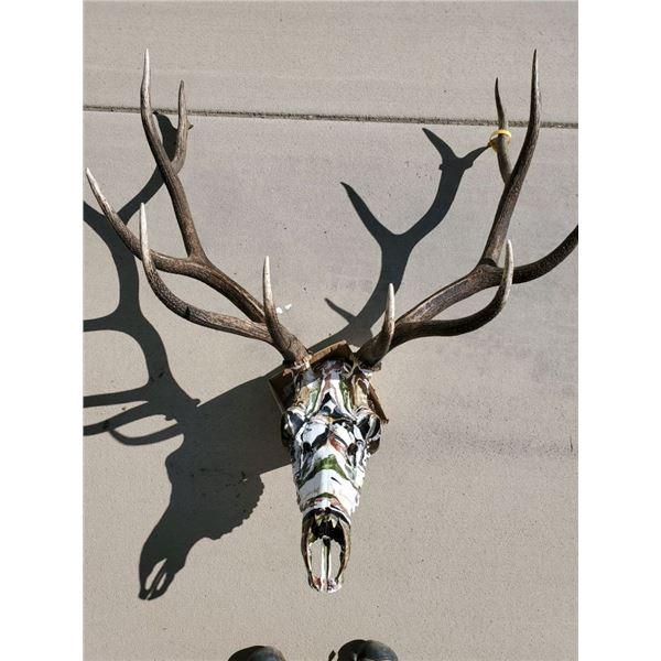 Hand Painted Elk Skull Mount