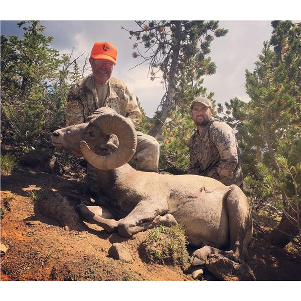 2021 WYO Governor's Bighorn Sheep License