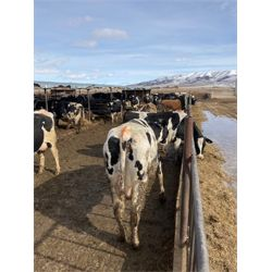ID Dairies/Ranches - 99 Cows