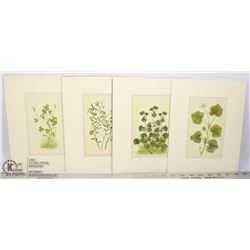 4 BOTANICAL LITHOGRAPHS FROM 'WILDFLOWERS OF