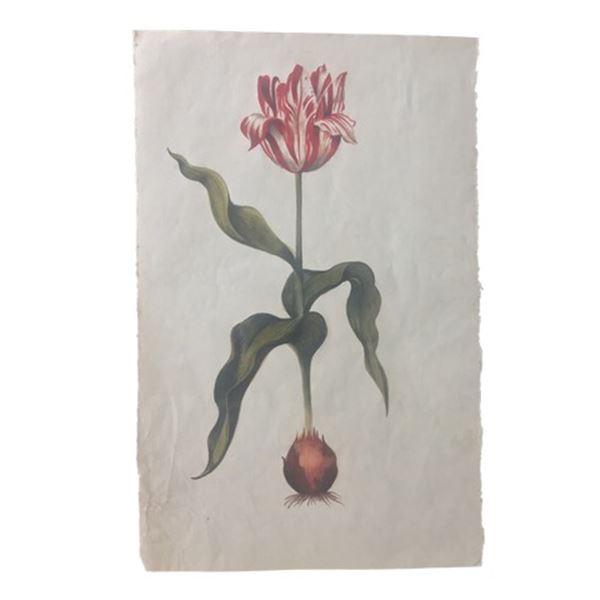 Tulip Fever Jan Van Loos (Dane DeHaan) Tulip Drawing Movie Props