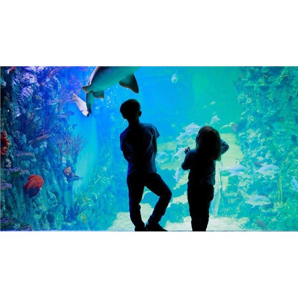 Aquarium of Boise Experience for Two Adults/Four Children