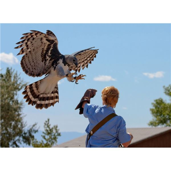 Visit Peregrine Fund's World Center for Birds of Prey