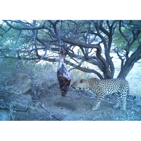 100% Daily Rate Donation for a 10-Day Plains Game Hunt for 1 hunter & 1 Observer in Namibia