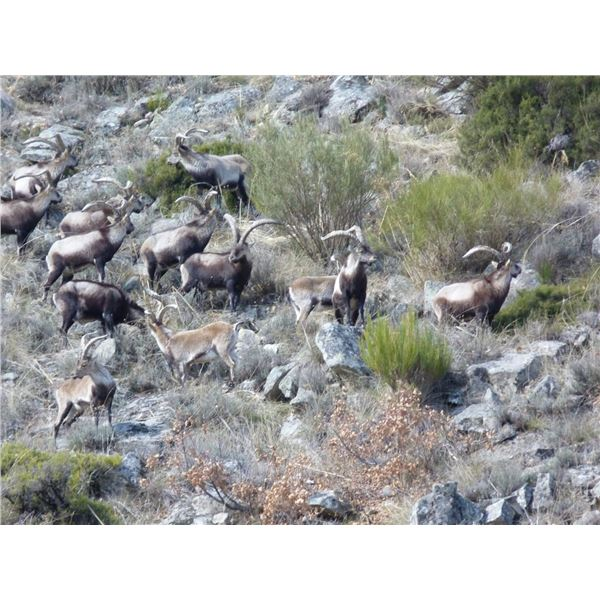 Red Stag Hunt in Spain valued at $8,600