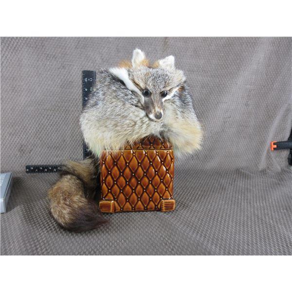 Fox Skin Hat