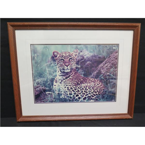 "Framed Photographic Print, African Nightfall, Leopard, 28""x23"" by Thomas D. Mangelsen"