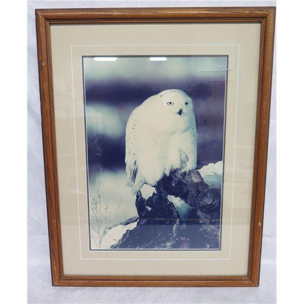 "Framed Photographic Print, Snow Owl Print by Thomas D. Mangelsen 22""x28"""