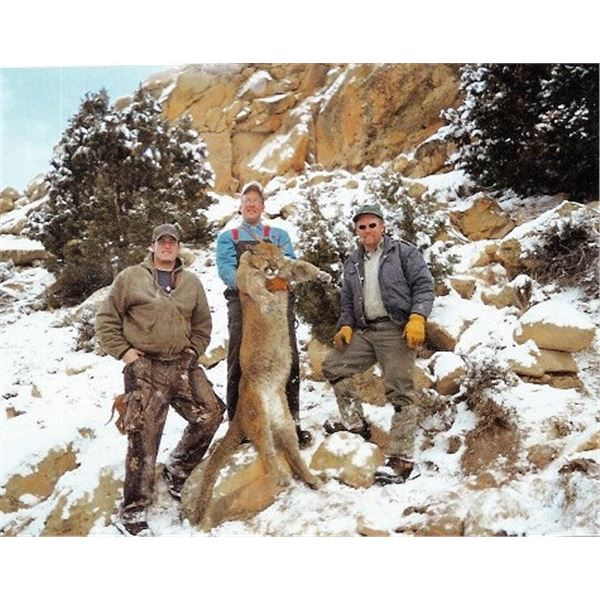 Five Day Guided Mountain Lion Hunt in Colorado