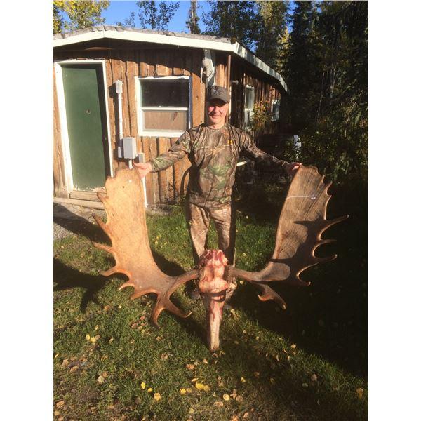 Alaska Unit 16B Any Bull Moose Special Permit