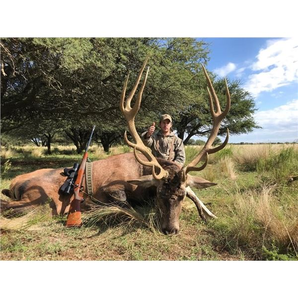 4-Day Argentina Red Stag or Water Buffalo Hunt for One Hunter