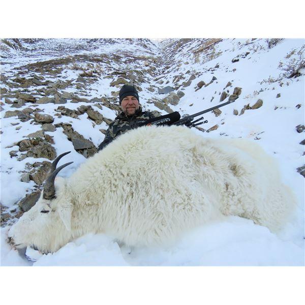 10-Day British Columbia Mountain Goat Hunt