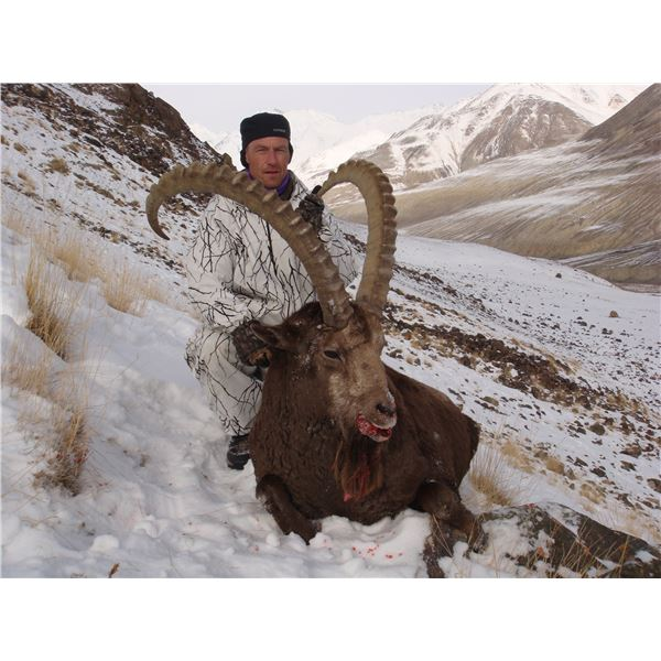 Seven Day Mid-Asian Ibex hunt for Two Hunters in Tajikistan
