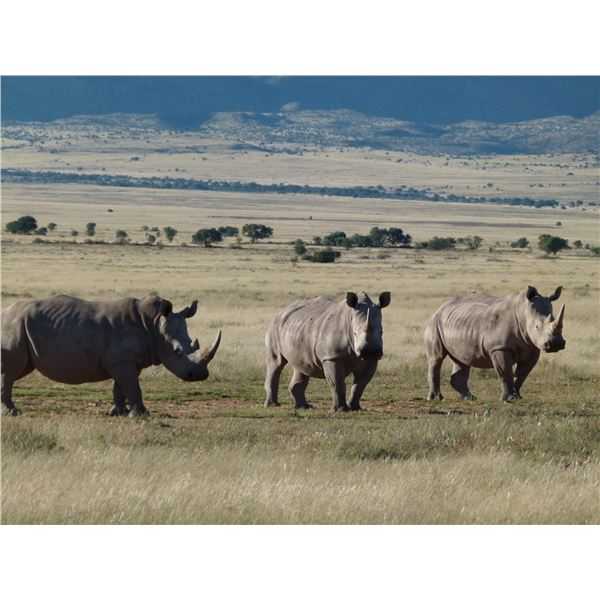 AFRICAN FIELD SPORTS: 5-Day White Rhino Vita Dart Hunt for One Hunter and One Non-Hunter in South Af