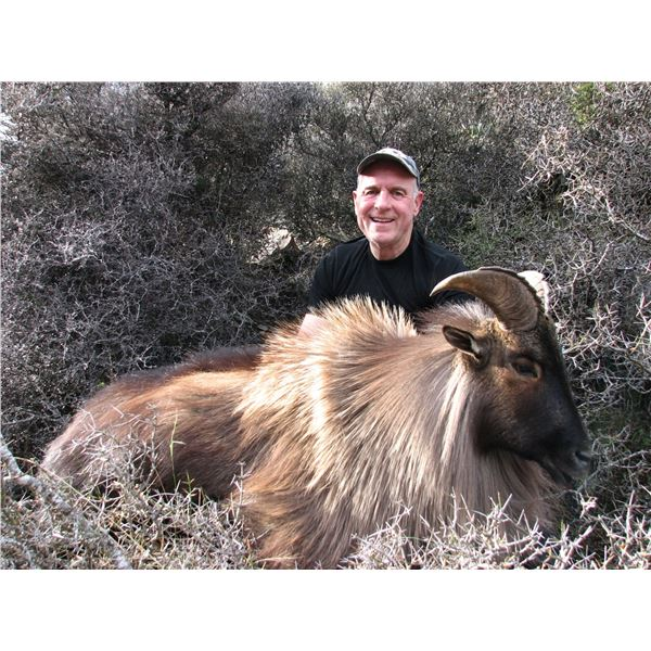RANGITATA: 4-Day Bull Tahr Hunt for Two Hunters and Two Non-Hunters in New Zealand