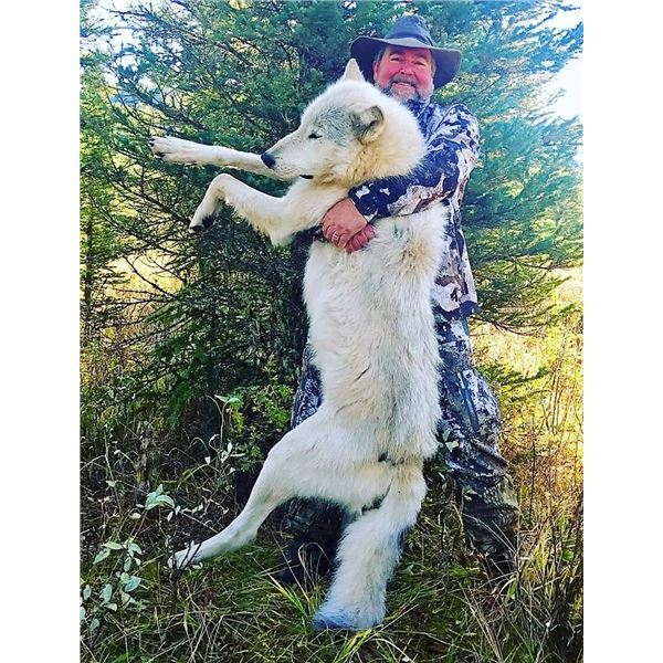 SAVAGE ENCOUNTERS: 6-Day Wolf Hunt for Two Hunters and Two Non-Hunters in Alberta, Canada