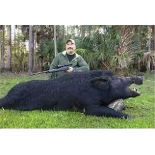 Wild Hog hunt for 4 in Florida
