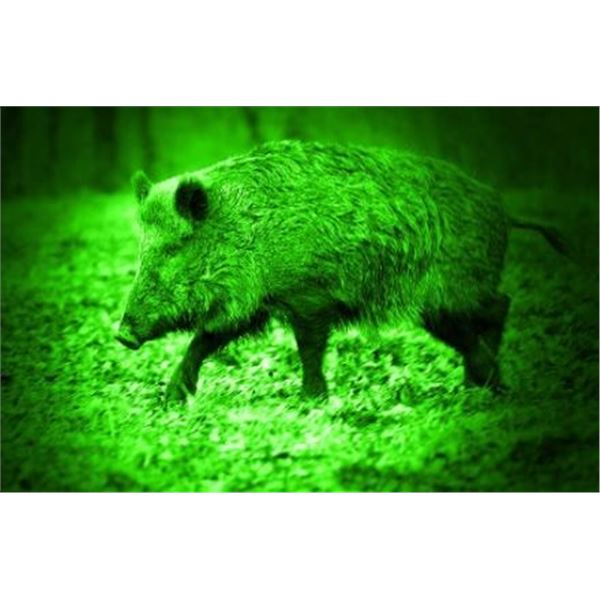 Night vision Hog hunt for 2 in Texas