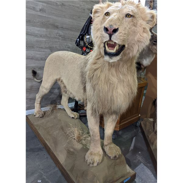 LION Full size lion mount approx 6.5ft length x 5.5ft height