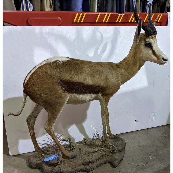 """Full size impala approx. 46"""" height x 35""""Width"""