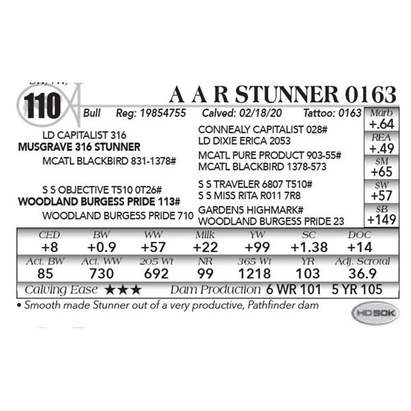 A A R Stunner 0163