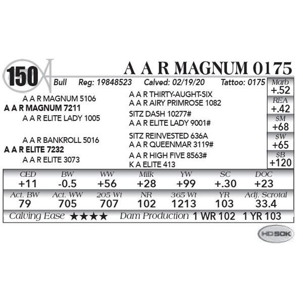 A A R Magnum 0175