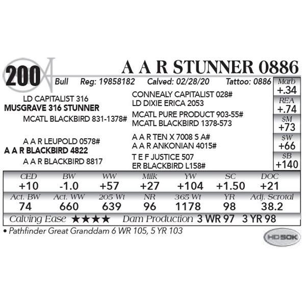 A A R Stunner 0886