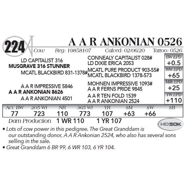 A A R Ankonian 0526