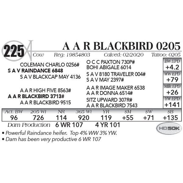 A A R Blackbird 0205