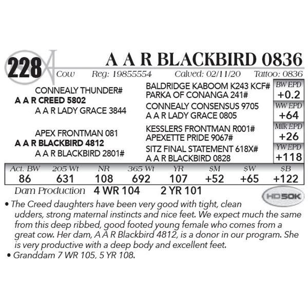 A A R Blackbird 0836