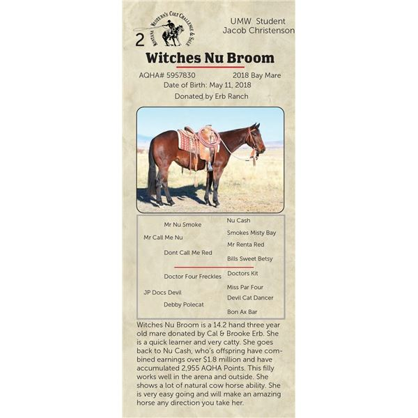 Witches Nu Broom - 2018 Bay Mare