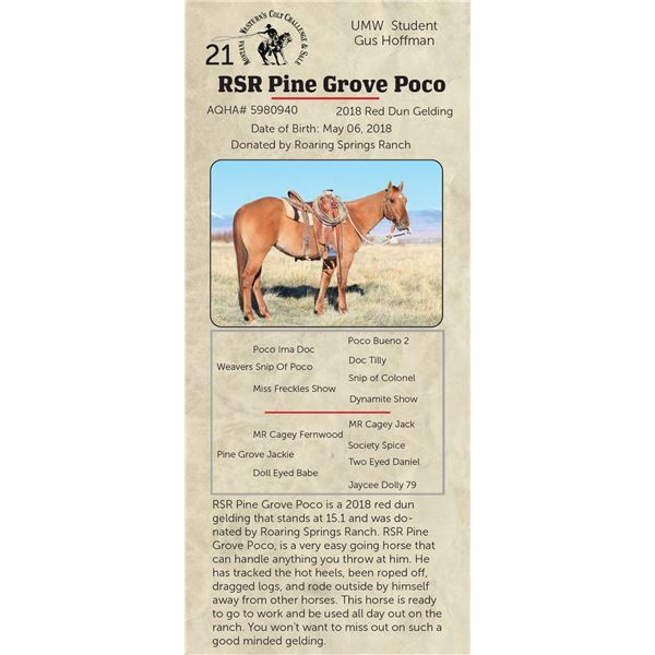 RSR Pine Grove Poco - 2018 Red Dun Gelding