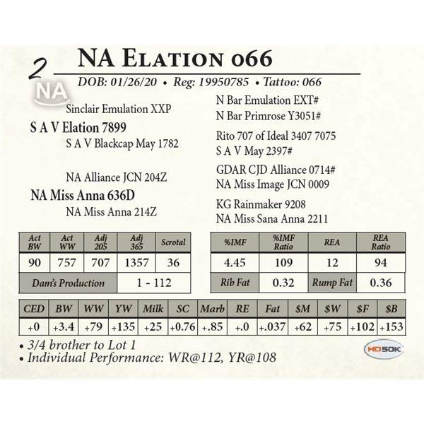 NA Elation 066