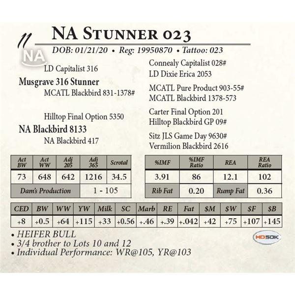 NA Stunner 023
