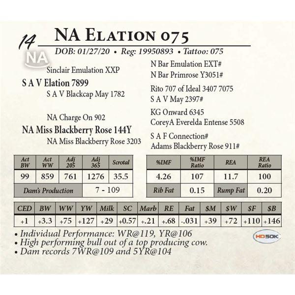 NA Elation 075