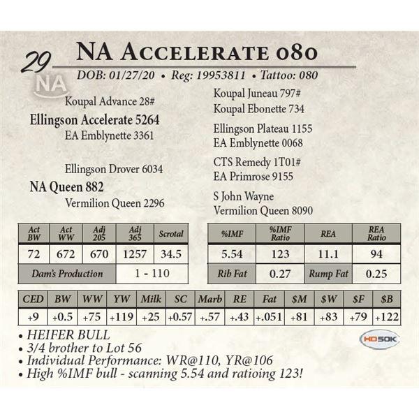 NA Accelerate 080