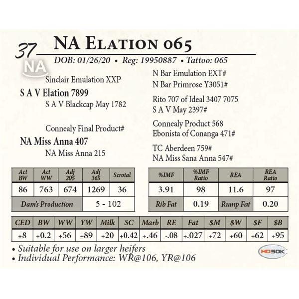 NA Elation 065
