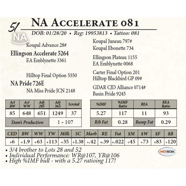 NA Accelerate 081