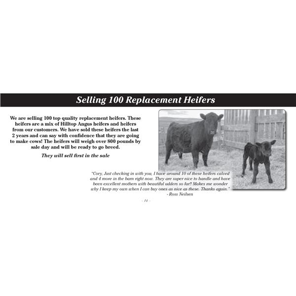 100 Head Replacement Heifers