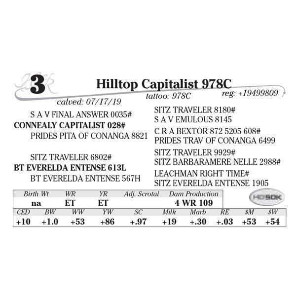 MH Capitalist 978C