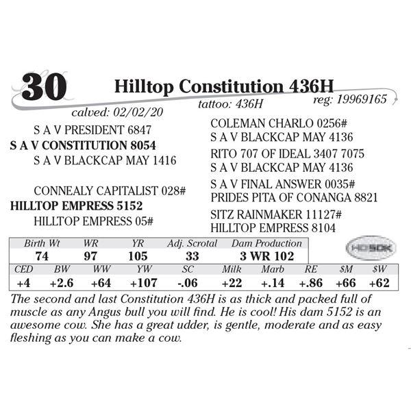Hilltop Constitution 436H