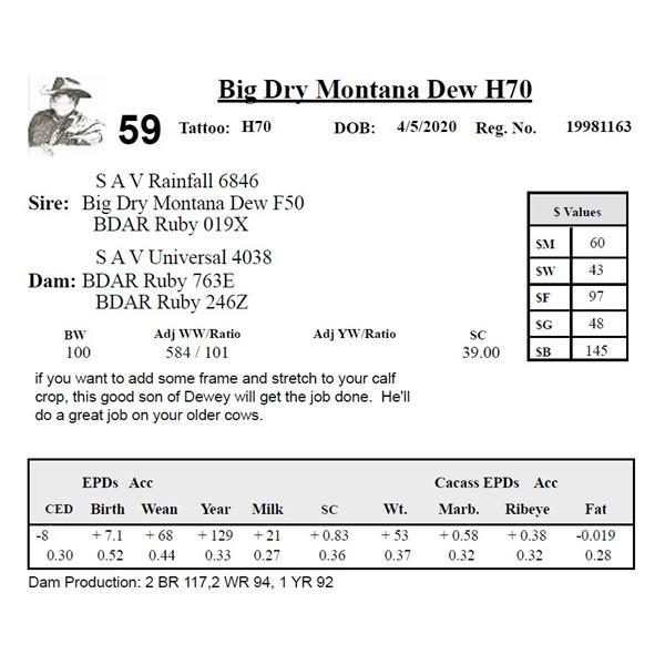 Big Dry Montana Dew H70