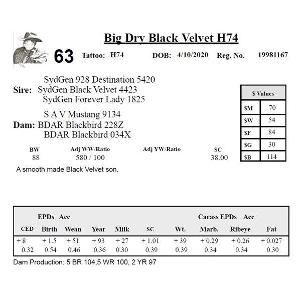 Big Dry Black Velvet H74