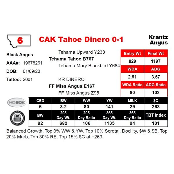 CAK Tahoe Dinero 0-1