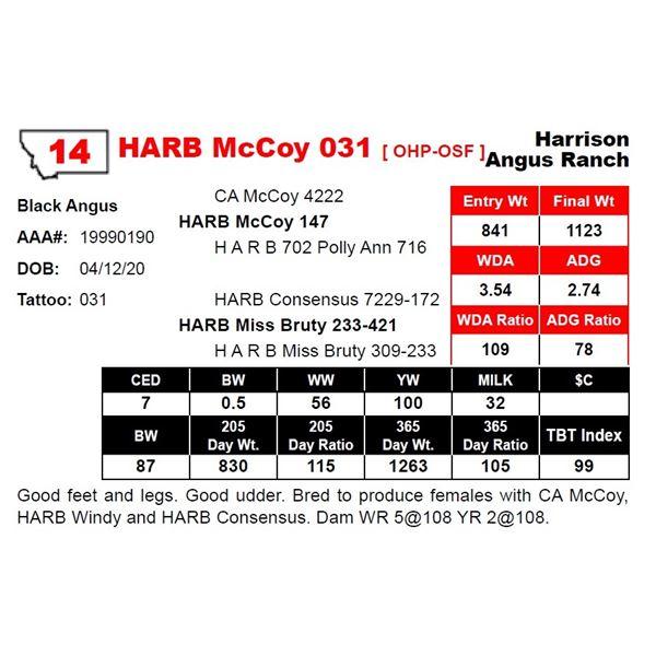 HARB McCoy 031
