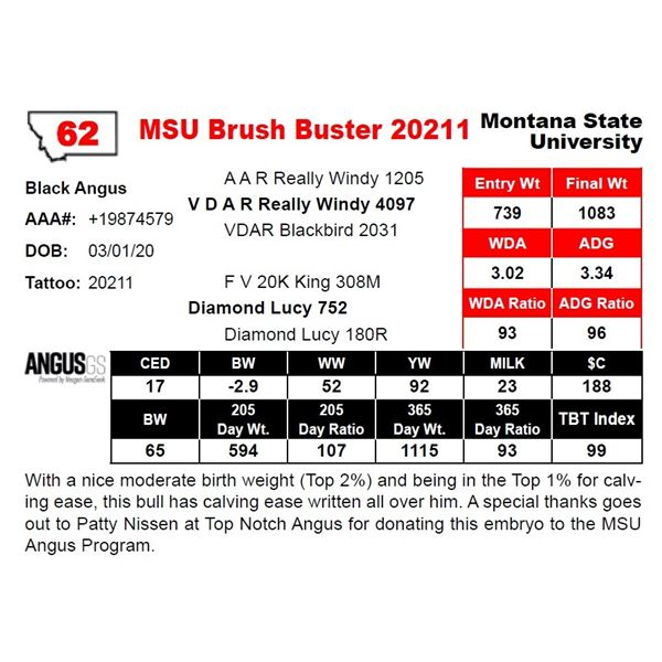MSU Brush Buster 20211