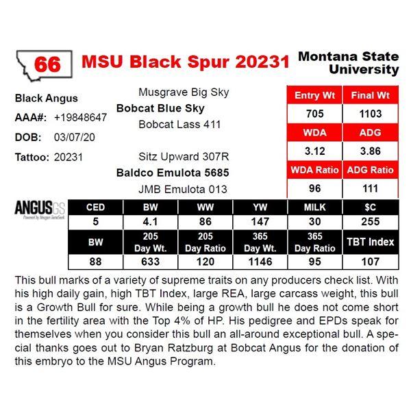 MSU Black Spur 20231