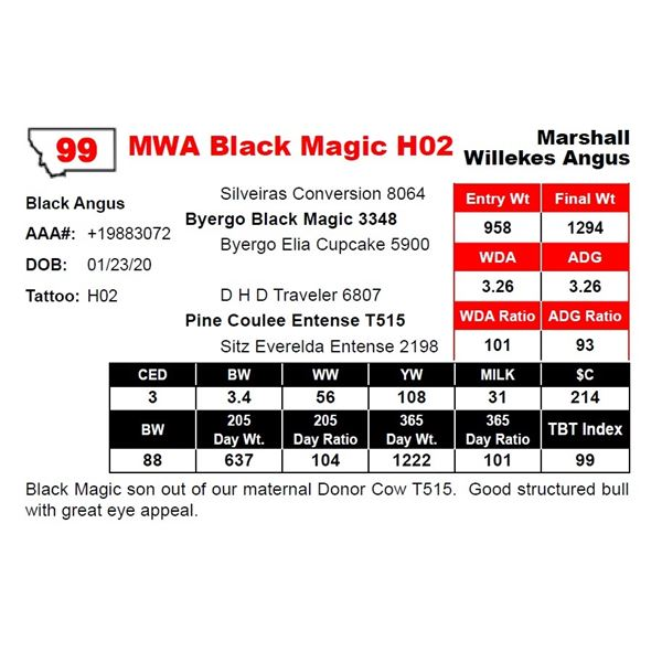 MWA Black Magic H02